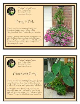 Pretty in Pink & Green with Envy Garden Container Recipes