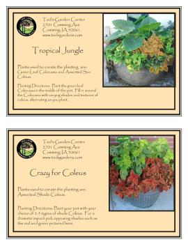 Tropical Jungle & Crazy for Coleus Container Garden Recipe