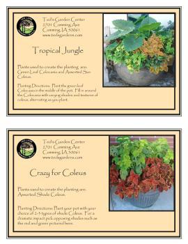 Tropical Jungle & Crazy for Coleus Container Garden Recipe