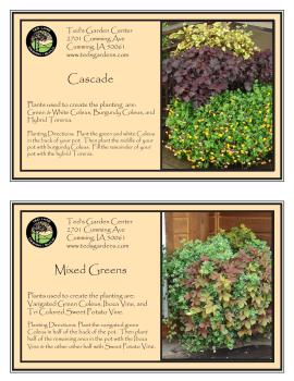 Cascade & Mixed Greens Container Garden Recipe