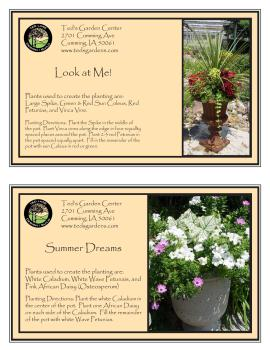Look at Me & Summer Dreams Container Garden Recipe