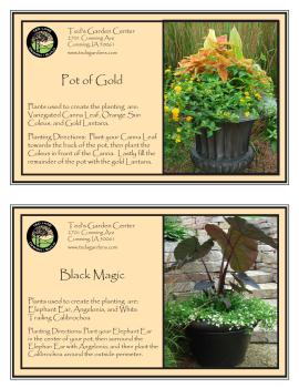Pot of Gold & Black Magic Container Garden Recipes