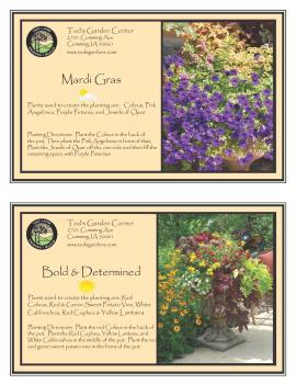 Mardi Gras & Bold and Determined Container Garden Recipe