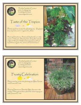 Taste of the Tropics & Frosty Celebration Container Garden Recipe