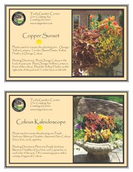 Copper Sunset & Coleus Kaleidoscope Container Garden Recipe