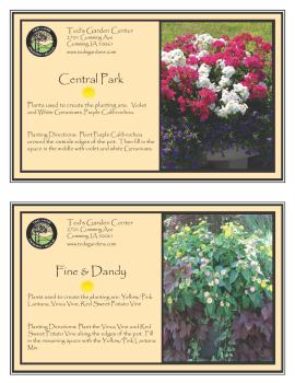 Central Park & Fine and Dandy Container Garden Recipe