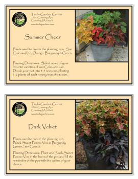 Summer Cheer & Dark Velvet Container Garden Recipe