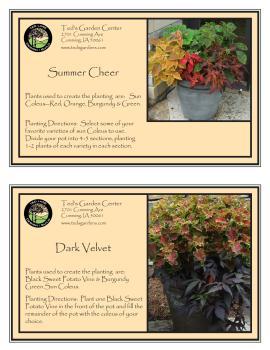 Summer Cheer & Dark Velvet Container Garden Recipe