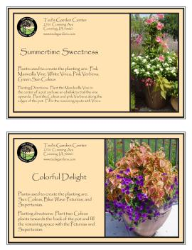 Summertime Sweetness & Colorful Delight Container Garden Recipe