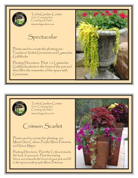 Spectacular & Crimson Scarlet Container Garden Recipe