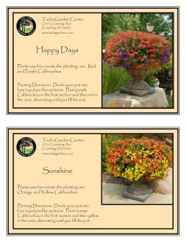 Happy Days & Sunshine Container Garden Recipe