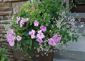 Light Pink Flowers Container Garden Recipe