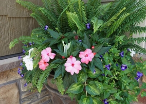 Pink, White and Blue Flowers Container Garden