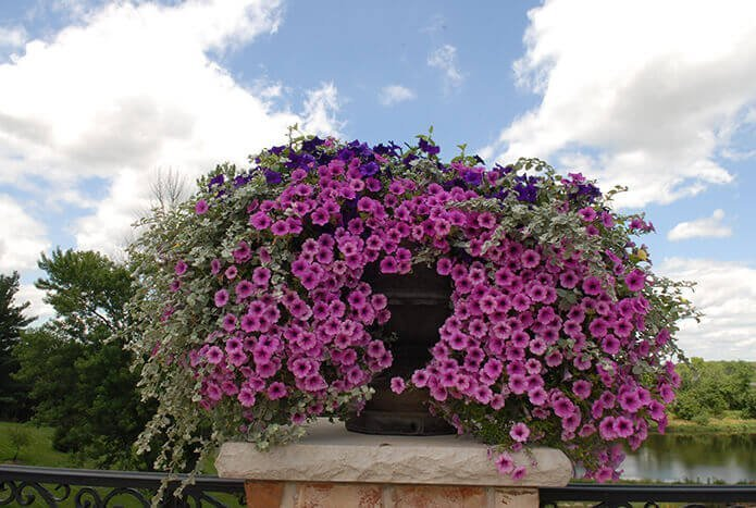Purple and White Flowers Container Garden