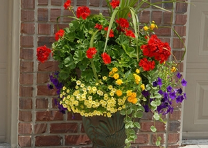 Red, Yellow and purple Flower Container Garden Recipe