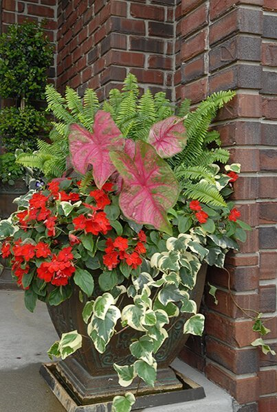 Red Flowers Container Garden Recipe