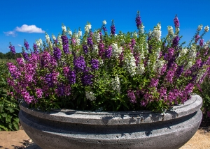 Shades of Purple Flowers Container Garden