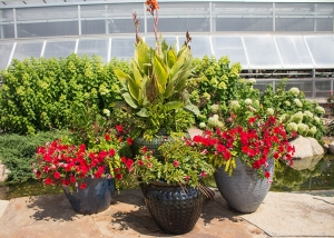 Red Flowers Container Gardens