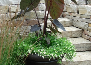 Simple Large Leaf Plant Container Garden