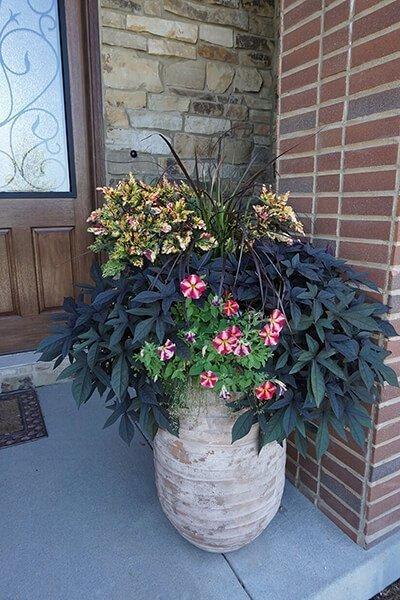 Petunia Container Garden Recipe