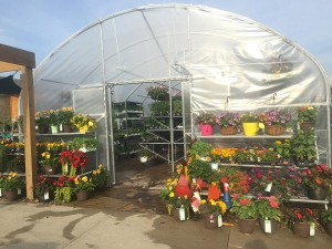 Ted Lare Greenhouse