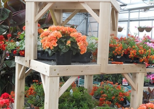Bon Orange Flowers At Ted Lare Garden Center Greenhouse