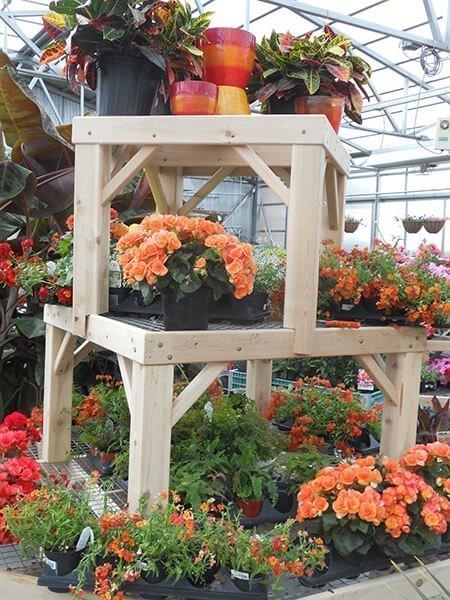 Orange Flowers at Ted Lare Garden Center Greenhouse