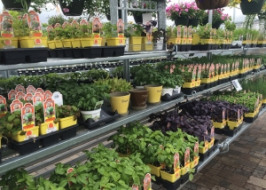Variety Of Garden Plants At Ted Lare Garden Center Greenhouse
