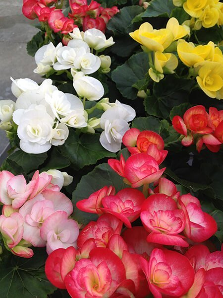 Hot Pink, Light pink, White and Yellow Flowers