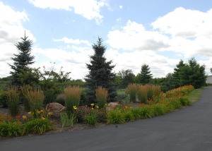 Driveway Lined with Flowers - Outdoor Landscaping by Ted Lare
