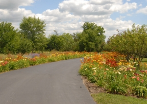 Colorful Flowers Lining Driveway