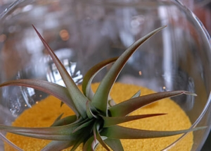 Succulent Plant in Glass