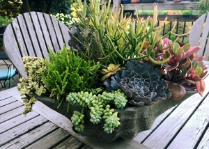 Rock Garden Planting with Succulents
