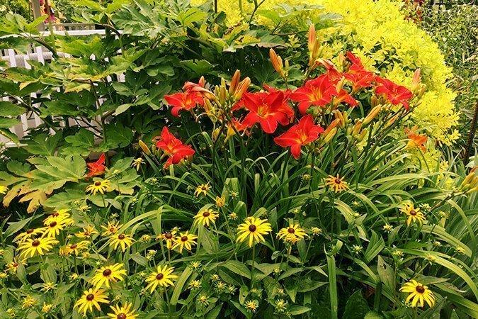 Perennial Flowers Des Moines