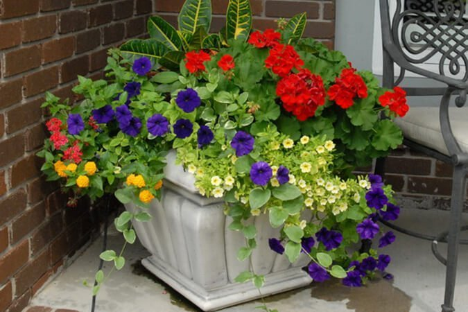 Bold and beautiful garden container