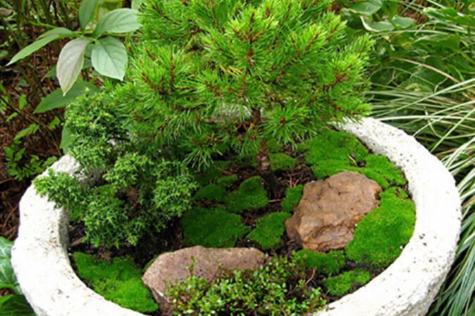 moss and shrub in rock planter