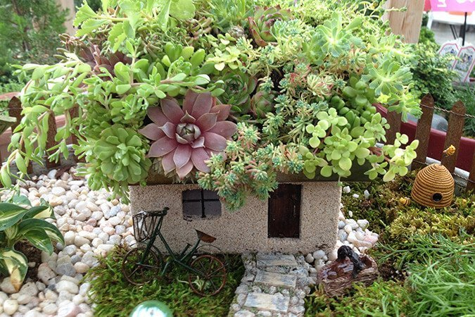 Fairy Garden with succulents