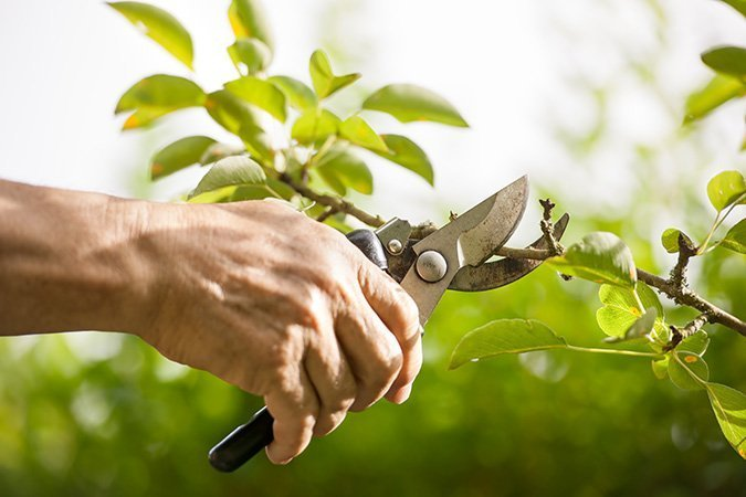 pruning and yard care