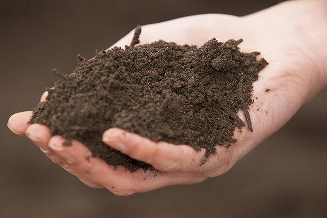 soil in open hand