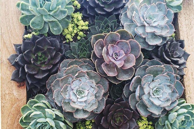 Succulent in Frame