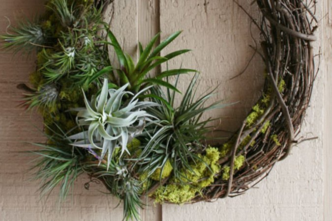 Simple Wreath with Moss and Rock Plants