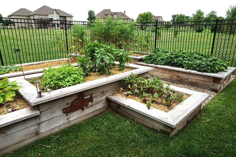 tedsgardens-cedar-vegetable-gardens - Ted Lare - Design & Build