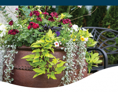 The Ted Lare Look container garden recipe tips and ideas