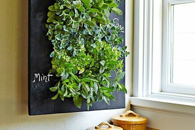 mint living wall