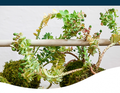 how to make a kokedama houseplant bonsai