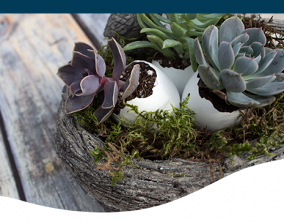 Eggshell succulent easter design creative DIY projects