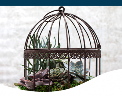 Succulent birdcage antique design decor home style living lifestyle creative diy project