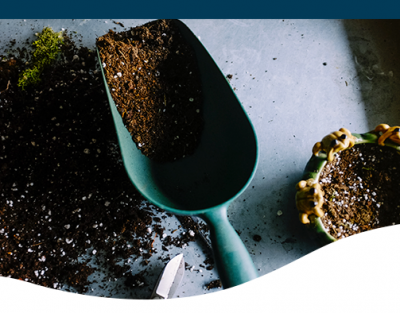seeding basics how to sow seeds vegetable garden