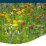 Iowa spring perennials summer blooming calendar timing season fall