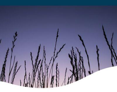 Ornamental grasses with a purple sky backdrop